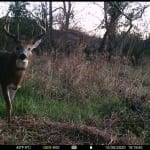 Trail cam photo: deer in the woods.
