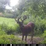 Trail cam photo: deer in a field.